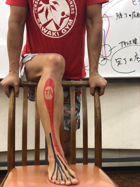 2日間で機能解剖学の基礎が学べるセミナー06